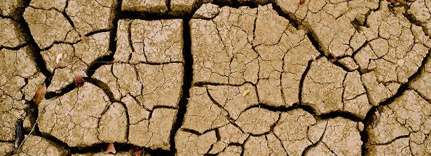Soil fertility exploratory study