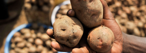 ARF1.2-3 More potatoes: secure food in Burundi