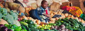 ARF1.2-4 Indigenous African vegetable systems for better livelihoods