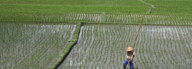 ARF1.2-5 Improve Indonesia's rice production by biological crop protection