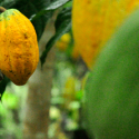 ARF1.3-6 Water and weather monitoring services for cocoa farmers in Ghana
