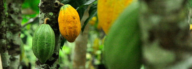 Water and weather monitoring services for cocoa farmers in Ghana