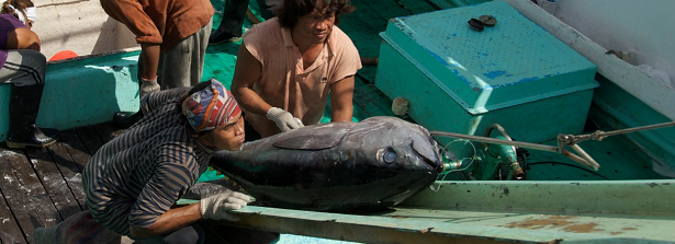 ARF2.1-2 Technology innovations for sustainability in tuna supply chains