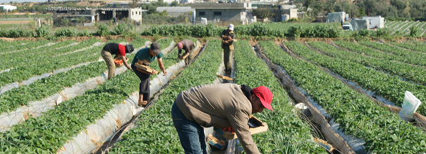 Building resilience for Palestinian farmers