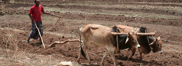 Think twice before ploughing