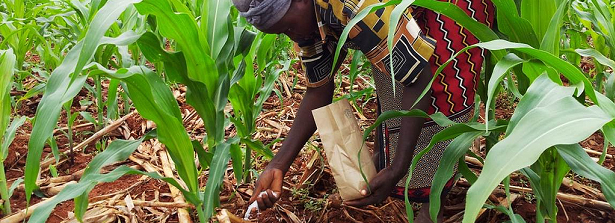 Nutrition for depleted African soils