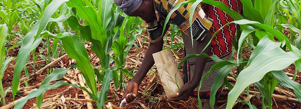 Nutritions for depleted African soils