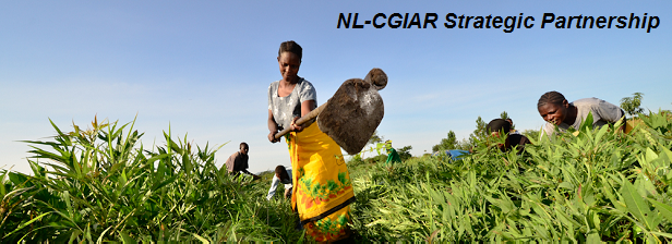 Busy summer for Strategic Partnership NL-CGIAR