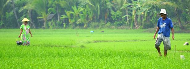 ARF2-2 Greening farms in Indonesia