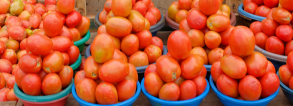 ARF2-2 Salvaging tomato production in Kenya from pests and diseases