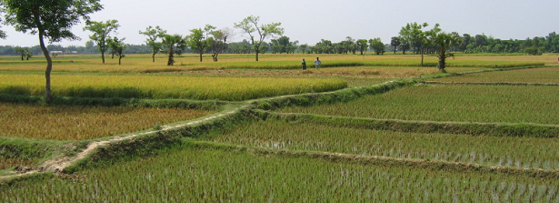 Ground cover app to drive an irrigation scheduling service in the delta region of Bangladesh