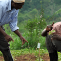 Strengthening agribusiness Ethics, Quality Standards & ICT usage in Uganda's value chains