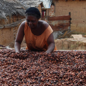 GCP 2 Transparancy information system for cocoa farmers Kenya