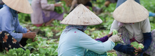 Event Report - Roundtable on Inclusive Agribusiness in Southeast Asia 23-24 September 2015, Ho Chi Minh City, Vietnam