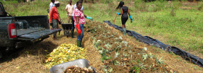 ARF1-3 Improving agricultural productivity using organic waste