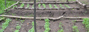 GCP3 Fast Track - Allotment gardens and food security in urban Africa