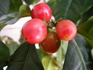 07-wikimedia