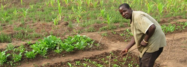 The World Cocoa Foundation is training African cocoa farmers to increase their production.