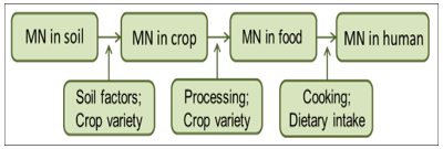 Schematic overview of micronutrient (MN) pathway from soil to humans and the factors that influence MN bioavailability to the next level. Based on Mayer et al. (2011).
