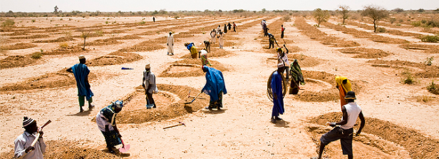 Agricultural policy to stem migration: A look at Syria and the Sahel