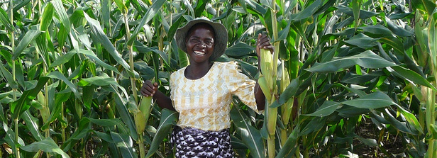 Job opportunities for youth in Africa's agricultural transformation