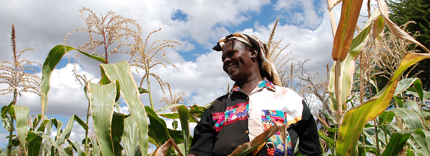 GCP3 Integrated Project - Sustaining food supplies and improving health in Kenya