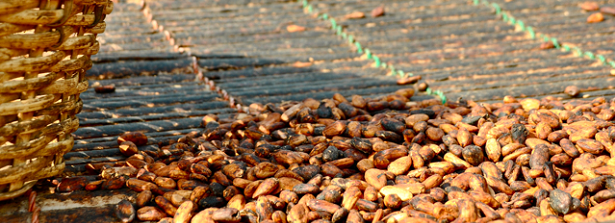 GCP3 Integrated Project - Cocoa crop improvement, farms and markets in Ghana and Ivory Coast