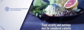 FAO consultation