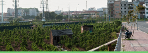 Workshop How to ensure food and nutrition security for all in a rapidly urbanising world