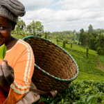 Youth inclusiveness in agricultural transformation