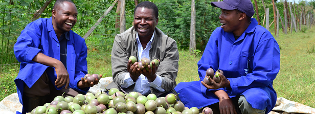 Moving forward on youth inclusiveness in agricultural transformation