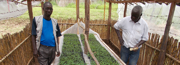 Exploring the potential of hybrid potato cultivars in East Africa