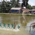 GCP1 Nutritious-system pond farming in Vietnam