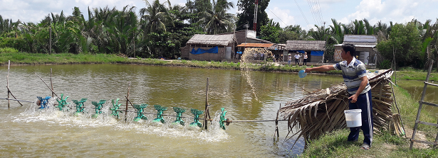 GCP1 Nutritious-system pond farming in Vietnam