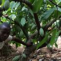 GCP-1 Helping poor farmers grow money in Sierra Leone