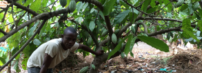 GCP-1 Helping poor farmers grow money in Sierra Leone