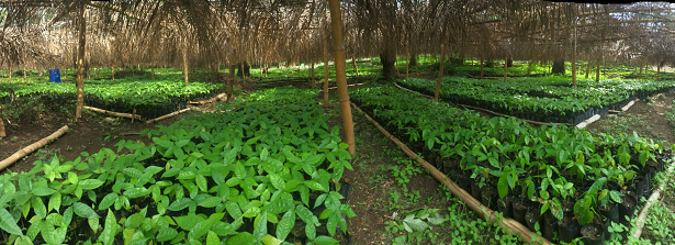GCP-1 midterm factsheet. Helping poor farmers grow money in Sierra Leone