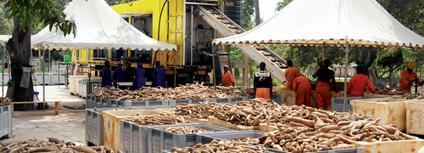 "Fit-to-Purpose factsheets ""DADTCO - The cassava revolution"""