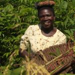 Gender and power analysis - ARF Project Cassava Uganda