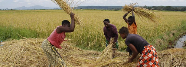 Towards inclusive investment and business models for improved land governance and livelihoods