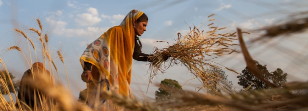 Eighty million Euro for Agri-food system research for development: NL-CGIAR partnership