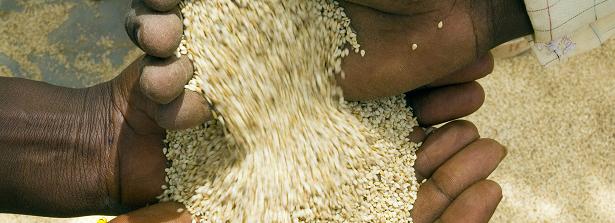 ARF-3-2d Mali Seeds