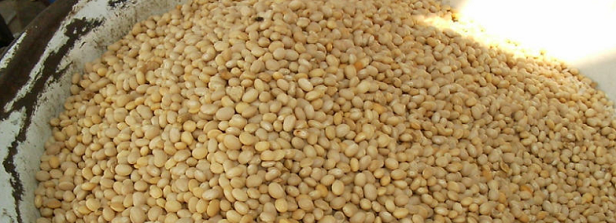 Enhancing Kersting's groundnut production-marketability in Benin