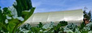 ARF-3-2g Ghana Greenhouses