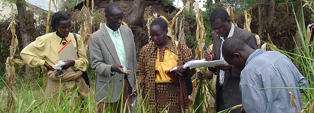 Agribusiness-based advisory services: a collaborative learning trajectory