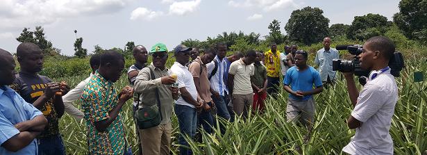 DAPIS field visit pineapple experiment