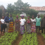 GCP-3FT Allotment gardens and FS in urban Africa - first pilots