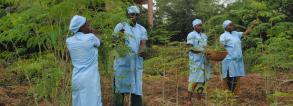 Valorisation of Moringa leaves to alleviate malnutrition in vulnerable groups in Benin (FortiMoringa)