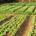 GCP-3FT Allotment gardens and FS in urban Africa
