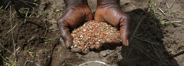 GCP-4 Citizen's Science for climate smart nutritious varieties